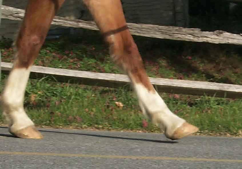 Bare Foot Horse